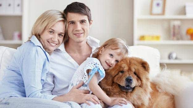 Wills & Trusts dog-young-family Direct Wills Slough
